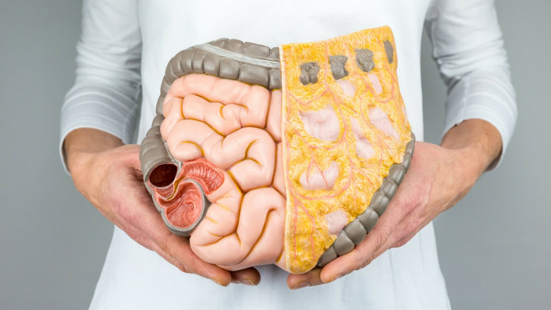 The Enteric Nervous System can be found in your abdomen