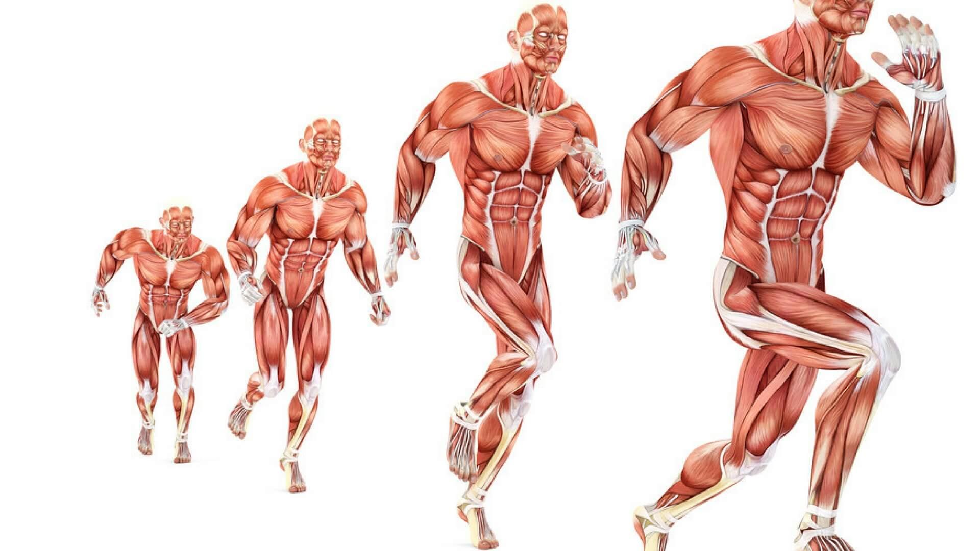Blog Fitnessgenes