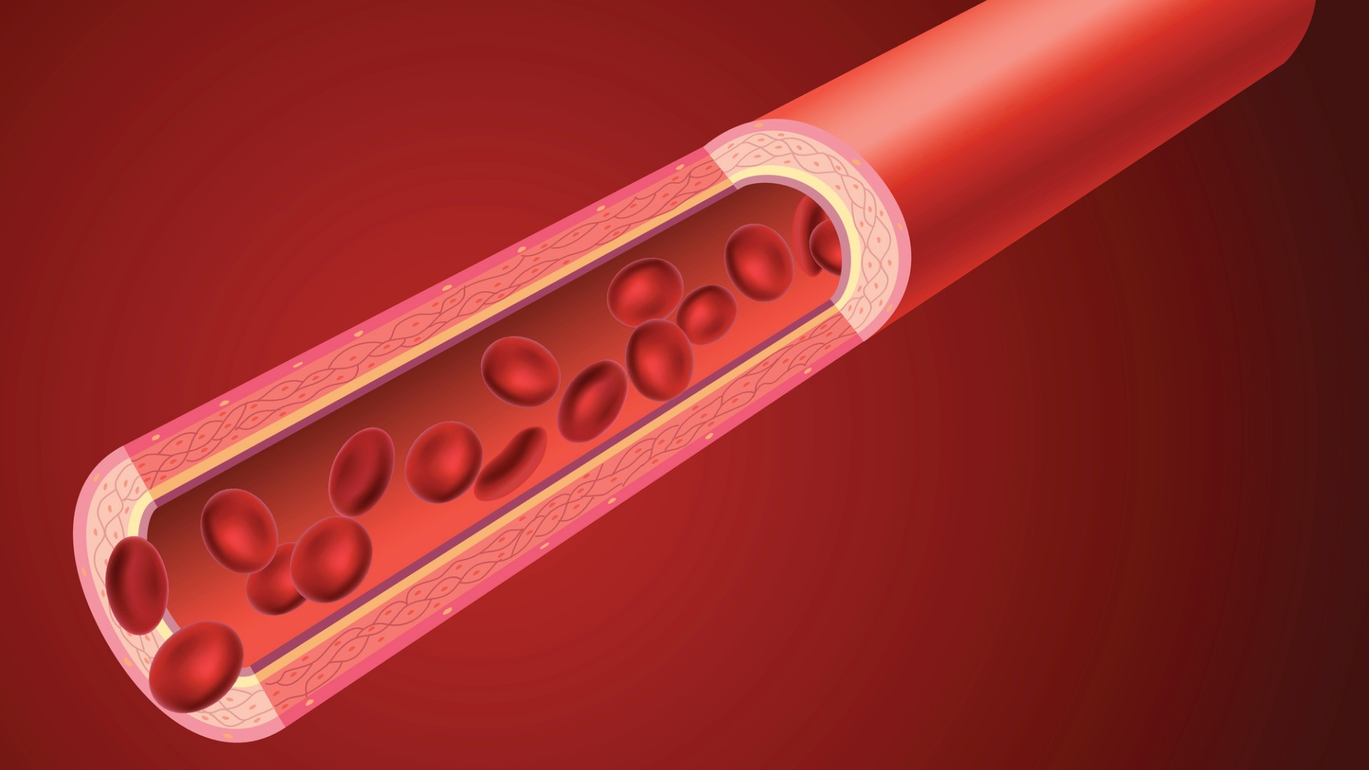 Trait overview: Nitric oxide and blood flow