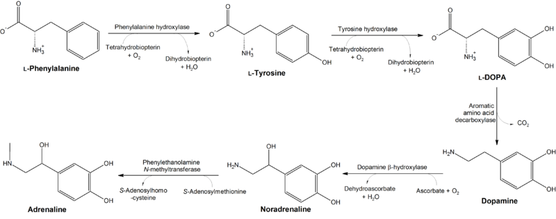 Dopamine synthesis