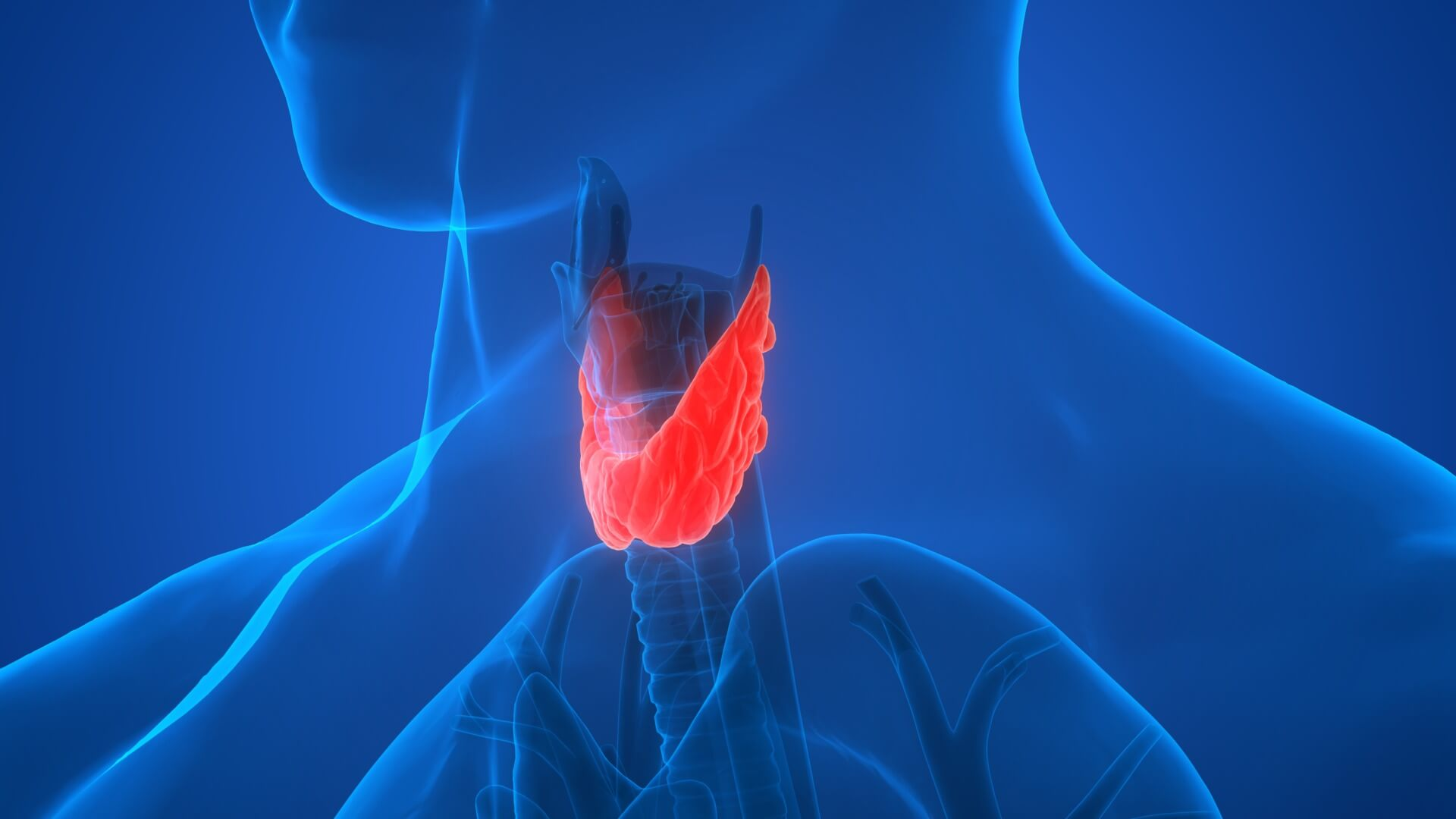 Your Thyroid Function Trait